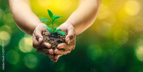 Fotografía  In the hands of trees growing seedlings
