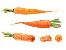 Watercolor Carrot Set