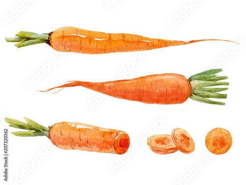Watercolor carrot set Wallpaper Mural
