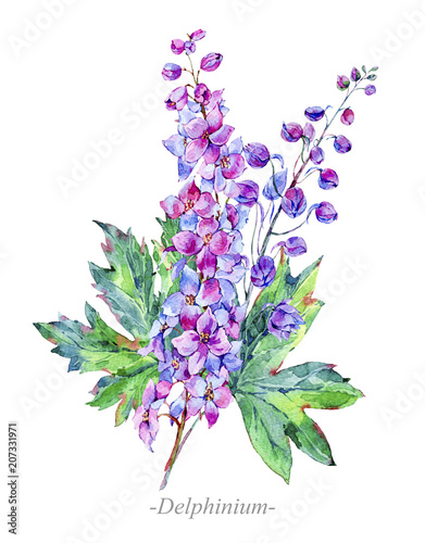Fotografie, Tablou Watercolor summer medicinal flowers, Delphinium plant