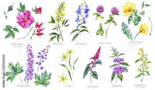 Watercolor summer set of medicinal flowers, Botany collection Canvas Print