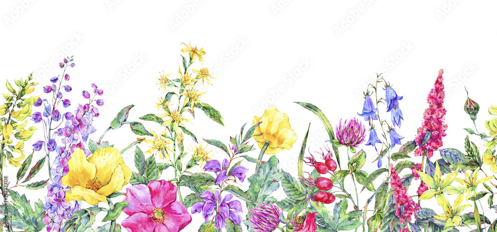 Photo  Watercolor summer medicinal floral seamless border, Wild flowers plant