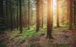 Bäume im Wald im Sonnenlicht