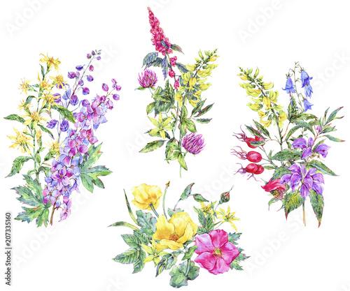Photo  Watercolor set of summer medicinal bouquet
