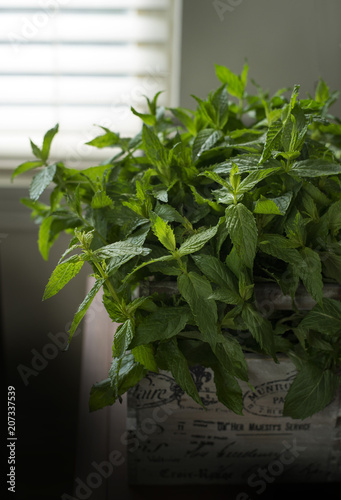 Keuken foto achterwand Planten Mint