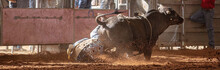 Bull Bucks Off Cowboy Rider Into The Dust At Country Rodeo