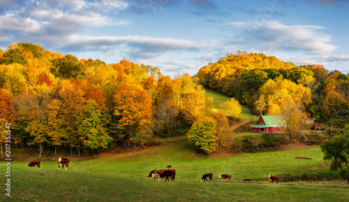Foto  Autumn Appalachian farm at the end of the day - cows on back roads near Boone No