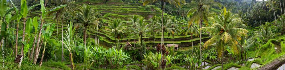 Fototapeta Panoramic view of Tegallalang Rice Terrace - Ubud - Bali - Indonesia