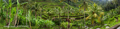 Garden Poster Rice fields Panoramic view of Tegallalang Rice Terrace - Ubud - Bali - Indonesia