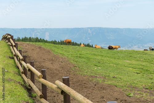 Foto op Plexiglas Asia land 阿蘇 放牧牛