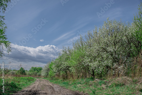 Poster Khaki Spring, landscape, flowering fruit trees near dirt road with beautiful blue sky and clouds