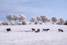 Countryside In Infrared - Germ...