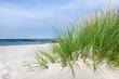 Ostsee Dünengras am Meer
