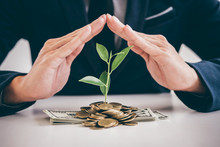 Hands Of Businessman Protection Plant Sprouting Growing From Golden Coins And Banknotes, Business Investment And Strategy Concept