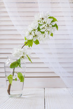 White Blooming Apple Tree Branch In Glass Vase On Light Background Of Blinds And Transparent Curtains.