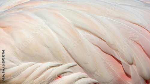 Papel de parede  Feathers on the wings of a pink flamingo as a background