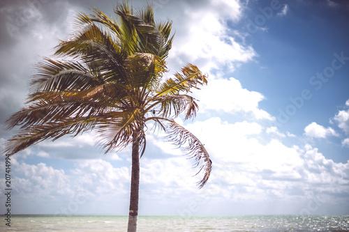 palm growing near sea