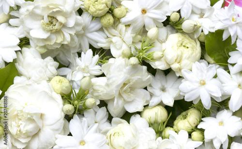 Fotografia White jasmine flowers fresh flowers natural
