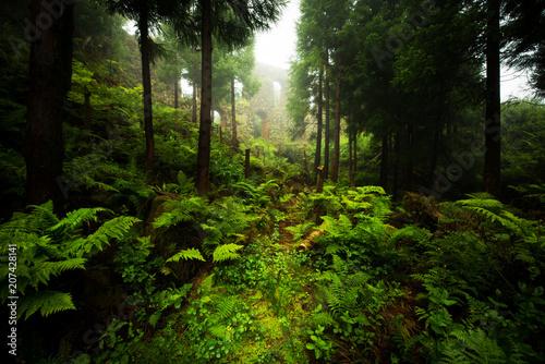 Foto op Plexiglas Landschappen Bosque misterioso