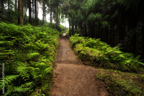Tuinposter Weg in bos Camino