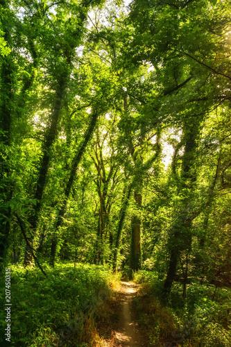 Summer Kansas Forest