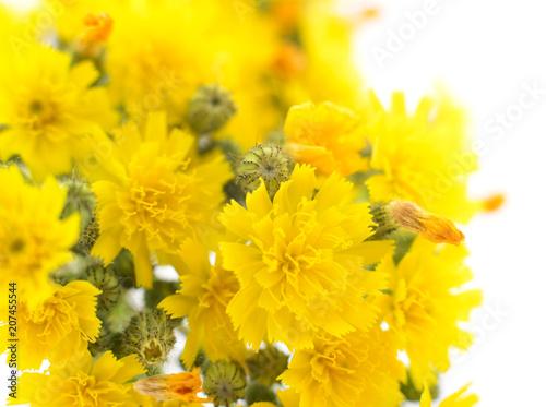 Papiers peints Fleur Yellow flowers background.