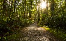 Rainforest Pathway