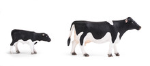 Black Cow And Calf Isolated On White Background, Various Poses