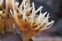 Kelp Sea Weed