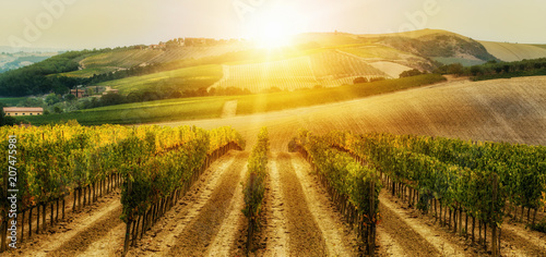 Photo sur Aluminium Vignoble Vineyard landscape in Tuscany, Italy.