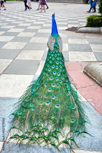 Foto op Aluminium Pauw Peacock in the Gardens of Cecilio Rodriguez
