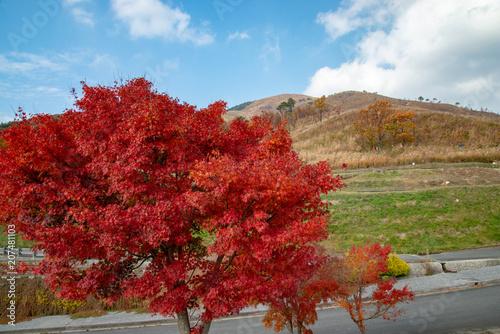 Poster Rood paars 広島県 深入山の秋