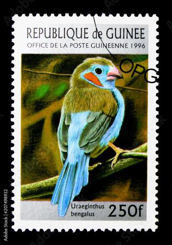 Poster  Red-cheeked Cordon-bleu (Uraeginthus bengalus), Birds serie, circa 1996