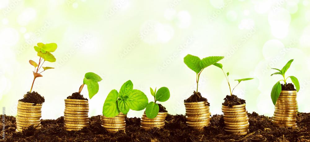 Fototapety, obrazy: Geld Vermehrung Wirtschaft - Konzept