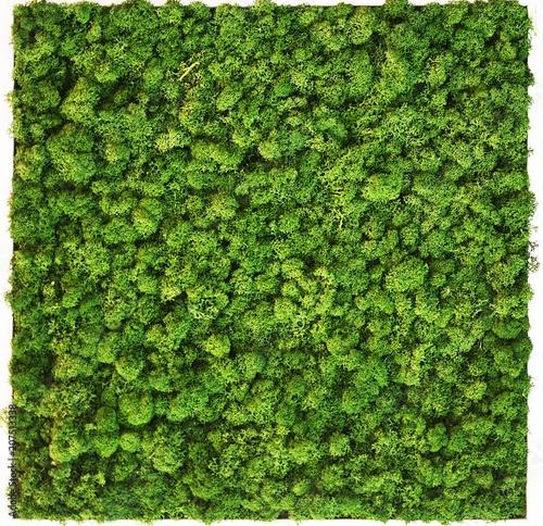 Poster Vegetal moss wall