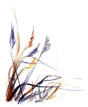 Watercolor Sketch Marsh Grass ...