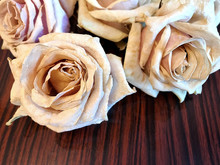 Tea Roses For Herbarium, Ikebana, Decor.