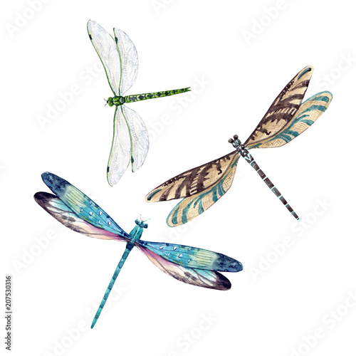 Watercolor dragonfly set