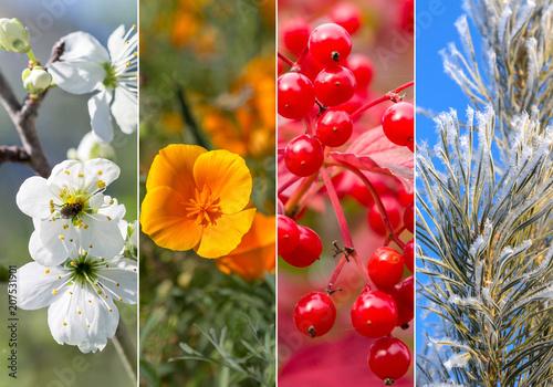 Fotografie, Tablou  Collage of four seasons