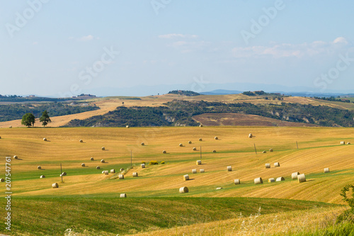 Tuinposter Honing Tuscany hills landscape, Italy