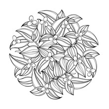 Vector Round Bouquet With Outline Tradescantia Or Wandering Jew Flower. Flower And Leaf In Black Isolated On White Background. Houseplant In Contour Style For Summer Design Or Coloring Book.