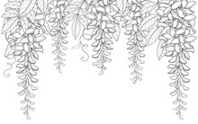 Vector Arch Or Tunnel Of Outline Wisteria Or Wistaria Flower Bunch, Bud And Leaf In Black Isolated On White Background. Blossom Climbing Plant Wisteria In Contour For Spring Design Or Coloring Book.