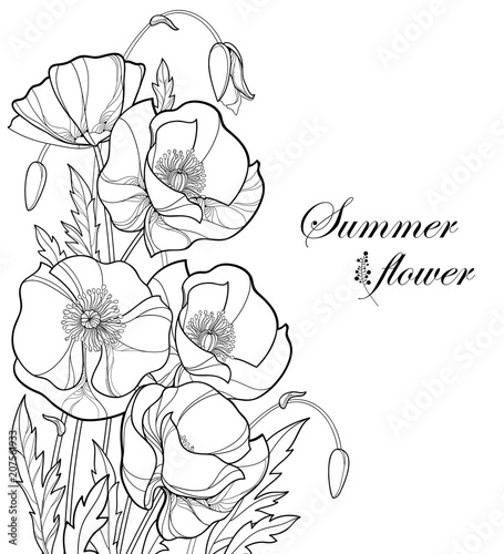 Vector corner bouquet with outline Poppy flower, bud and leaves in black isolated on white background. Ornate poppies in contour style for summer design and coloring book. Symbol of Remembrance Day.