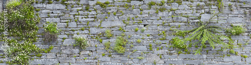 Schön bewachsene Natursteinmauer