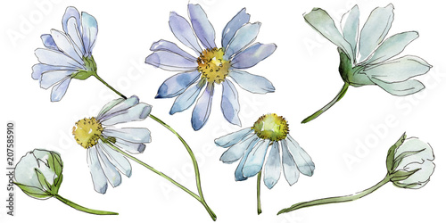 Fotografia White daisy