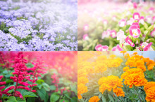 Four Seasons Of Flower. Spring, Summer, Autumn And Winter. Four Colors Purple, Orange, Red, Pink For Presentation And Happy Valentine Day. Decorated In Interior Living Room.