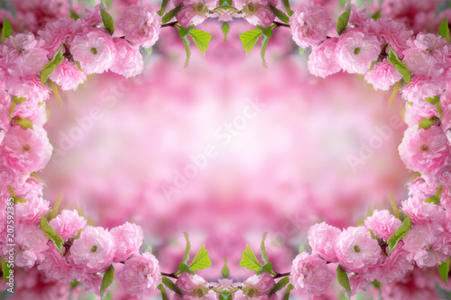 In de dag Candy roze Mysterious spring floral background and frame with blooming pink sakura flowers