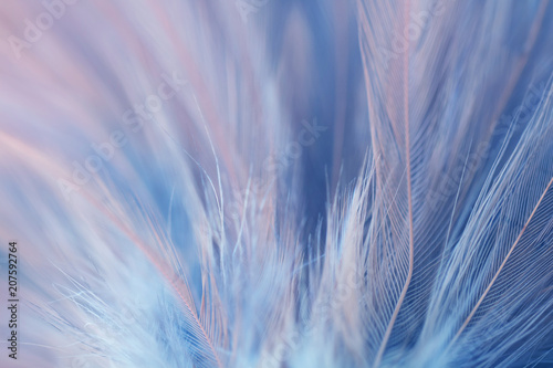 Türaufkleber Makrofotografie Blur Bird chickens feather texture for background Abstract, soft color of art design.