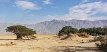 Desert Vegetation In The Arava Valley At Yotvata Near The Israel Jordan Border