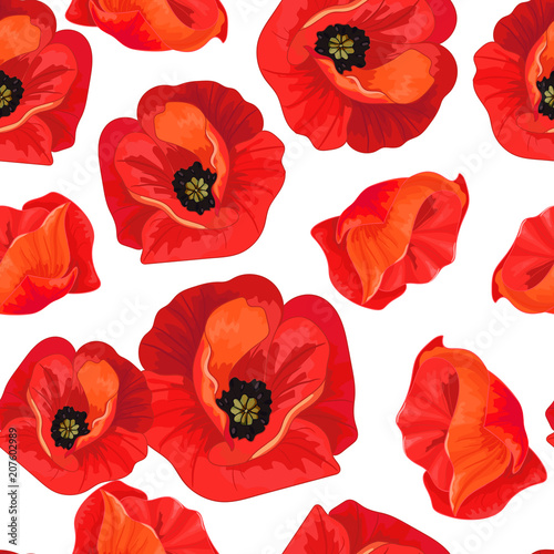 Red poppies on a white